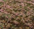 Travní foliáže - Vřesoviště