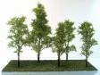 Sada listnatých stromků z merlíku - světlý odstín