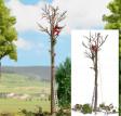 H0 - Péče o strom