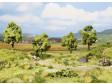 H0, TT, N - Ovocné stromy zelené, 4 ks