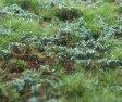 Lesní základ - borůvkoviště